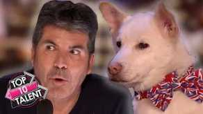 TOP 10 SMARTEST DOG Auditions On Britain And America's Got Talent!
